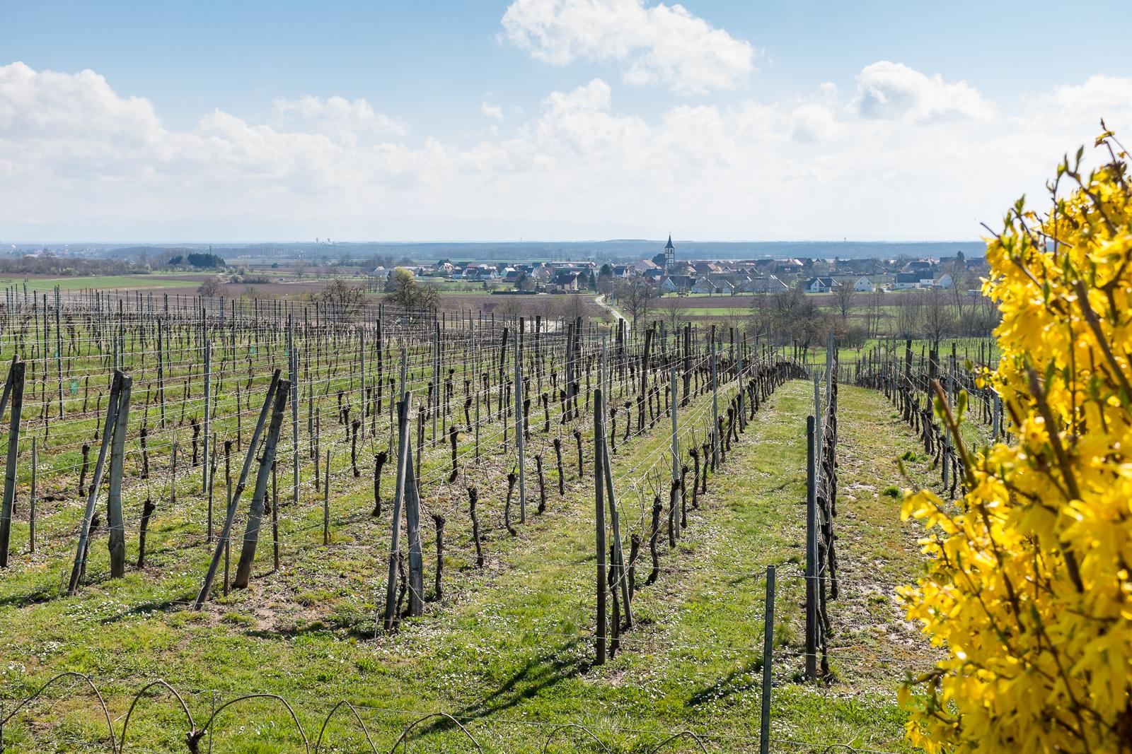 Dag02-Alsace-012-DSCF1309