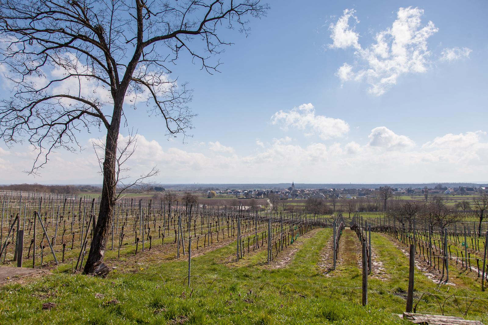 Dag02-Alsace-013-IMG_48028