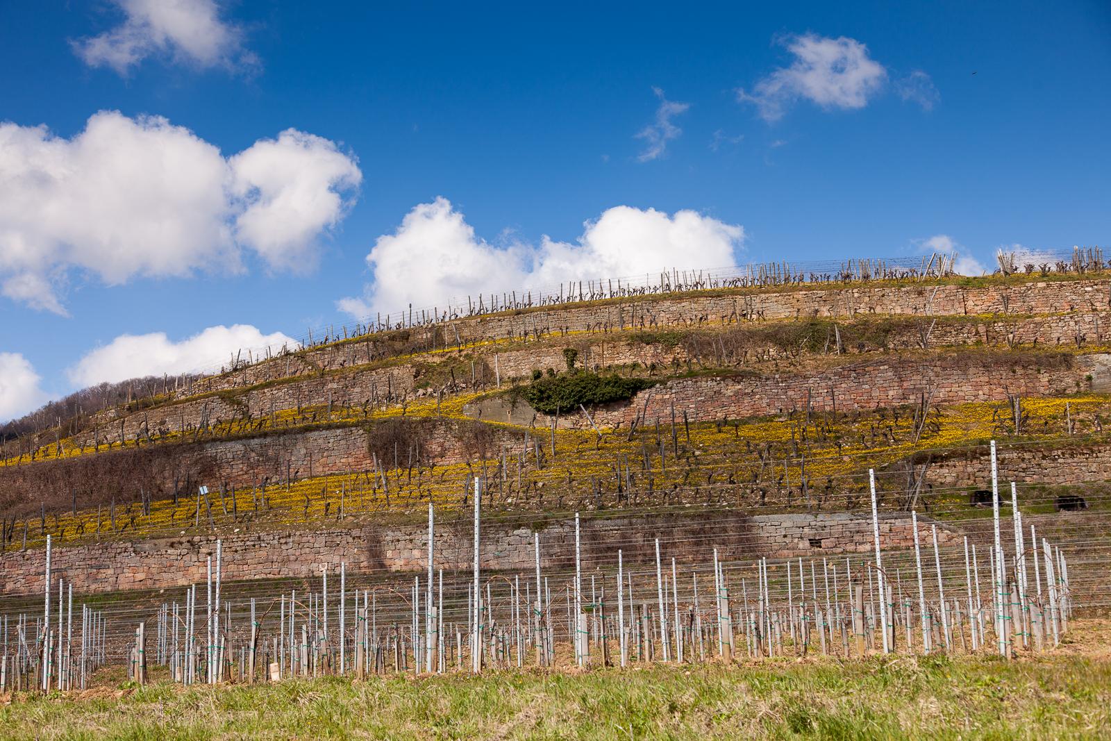 Dag02-Alsace-019-IMG_48048