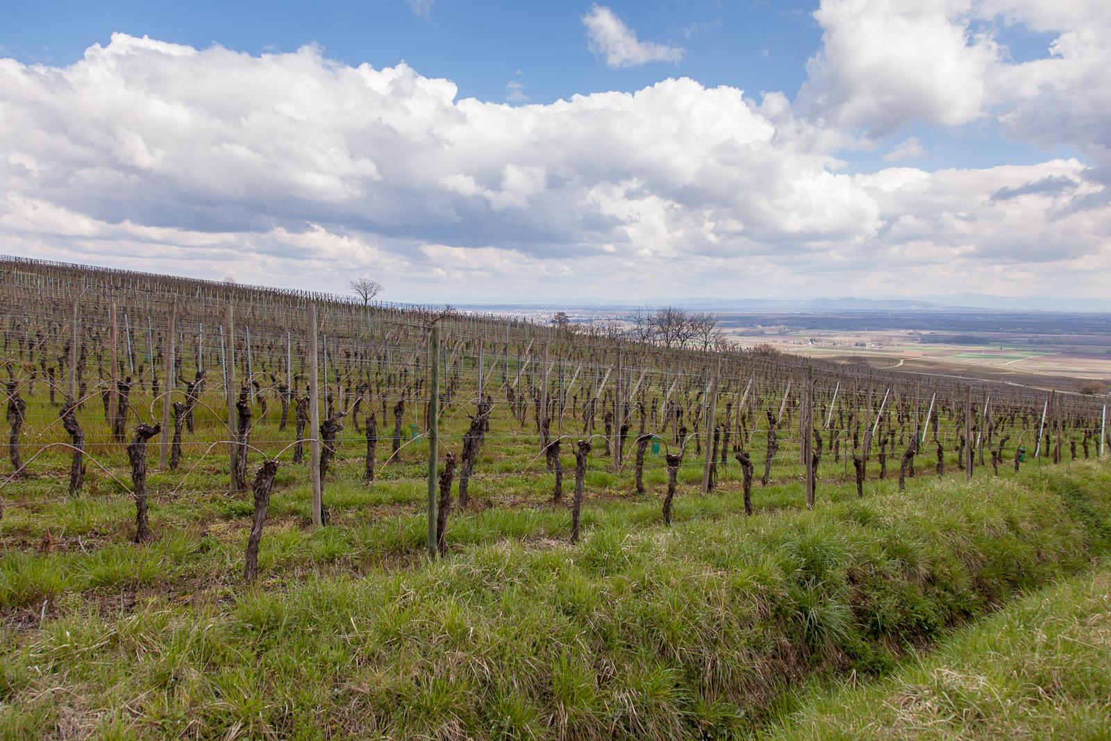 Dag02-Alsace-031-IMG_48085