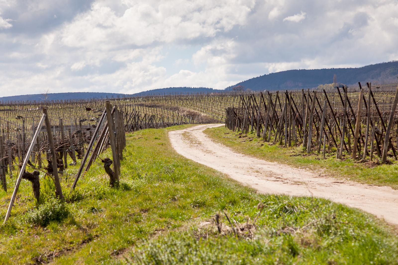 Dag02-Alsace-033-IMG_48090