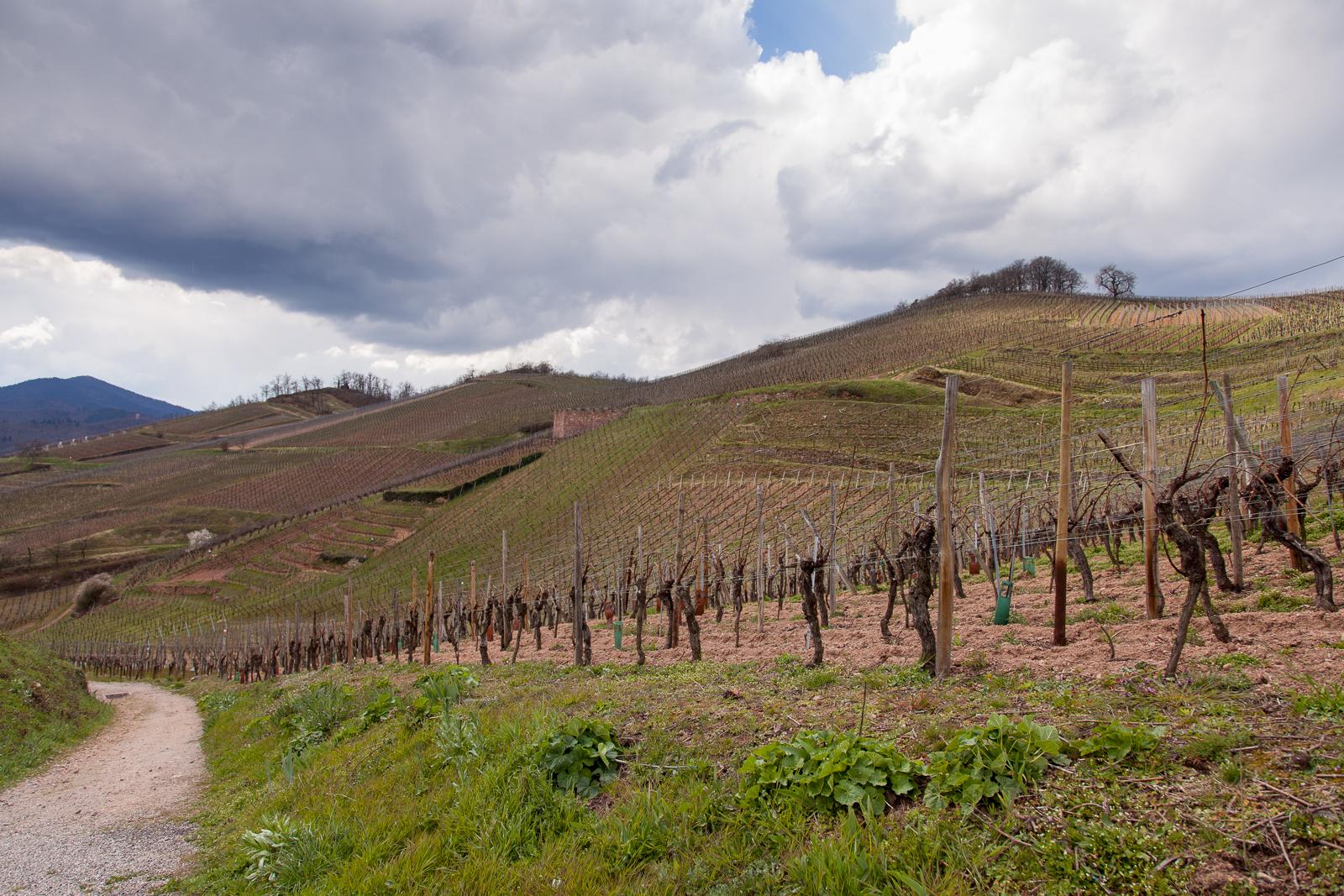 Dag02-Alsace-039-IMG_48111