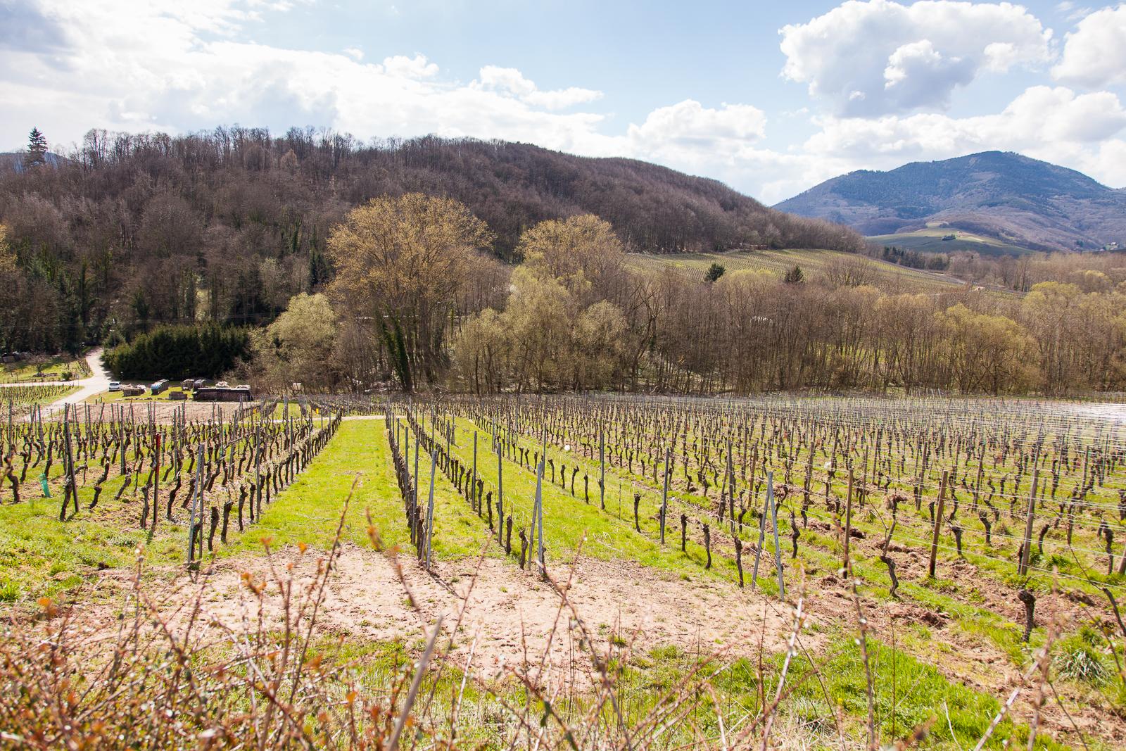 Dag02-Alsace-050-IMG_48145