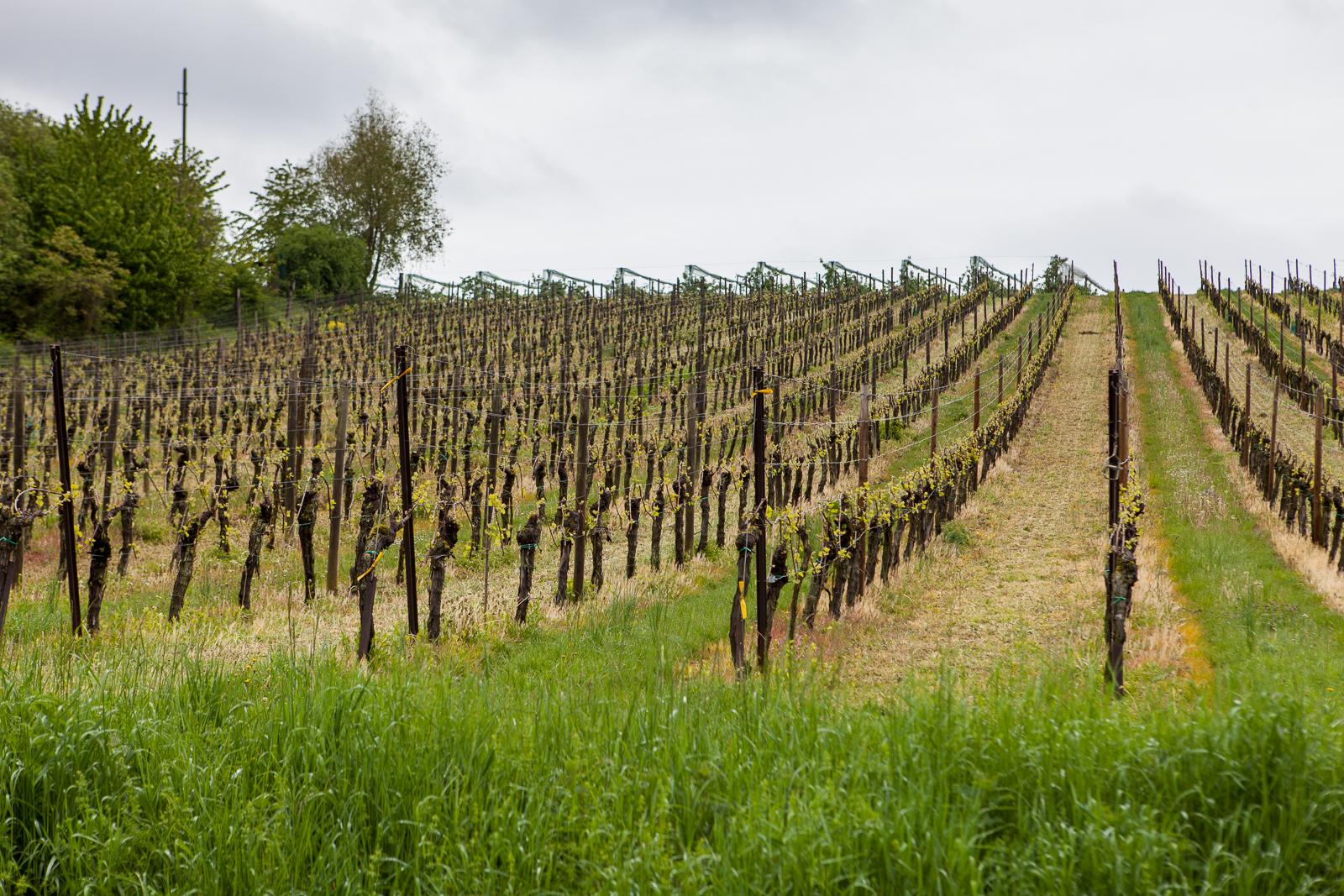 Dag02-Alsace-011-IMG_48630