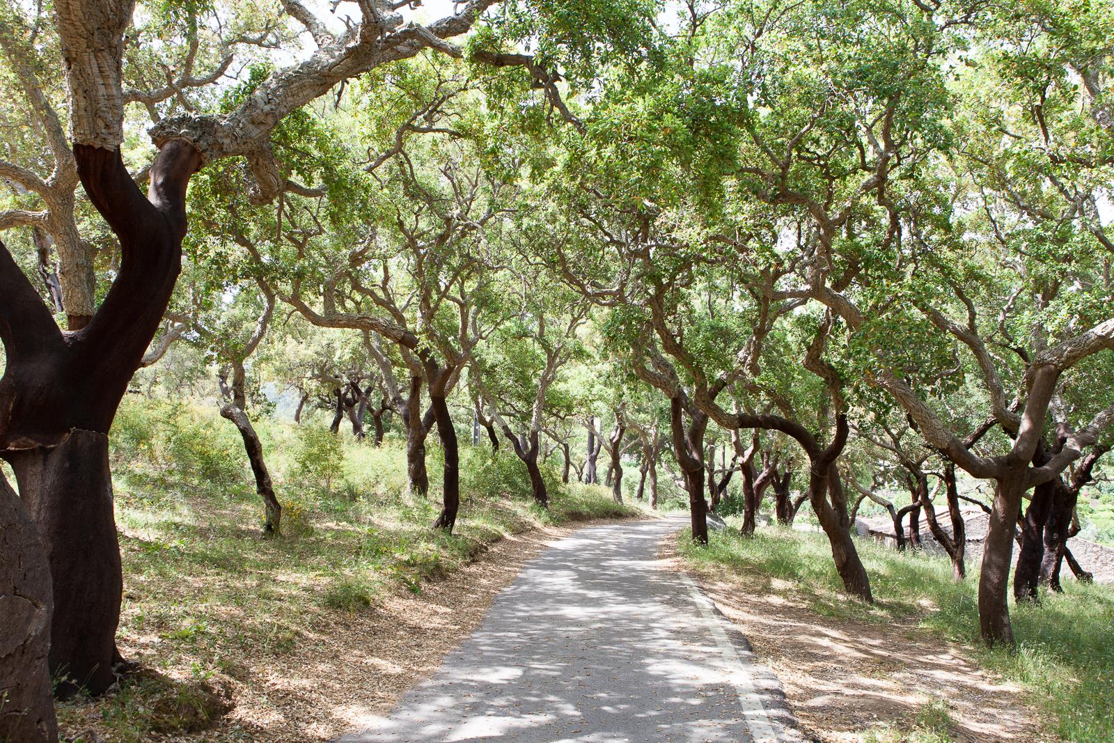 Dag03-Algarve-036-IMG_49036