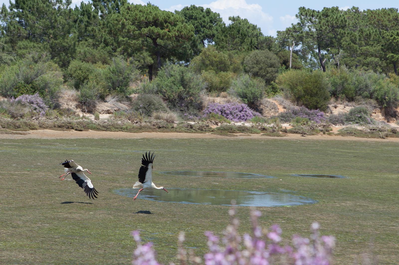 Dag08-Algarve-029-IMG_49670