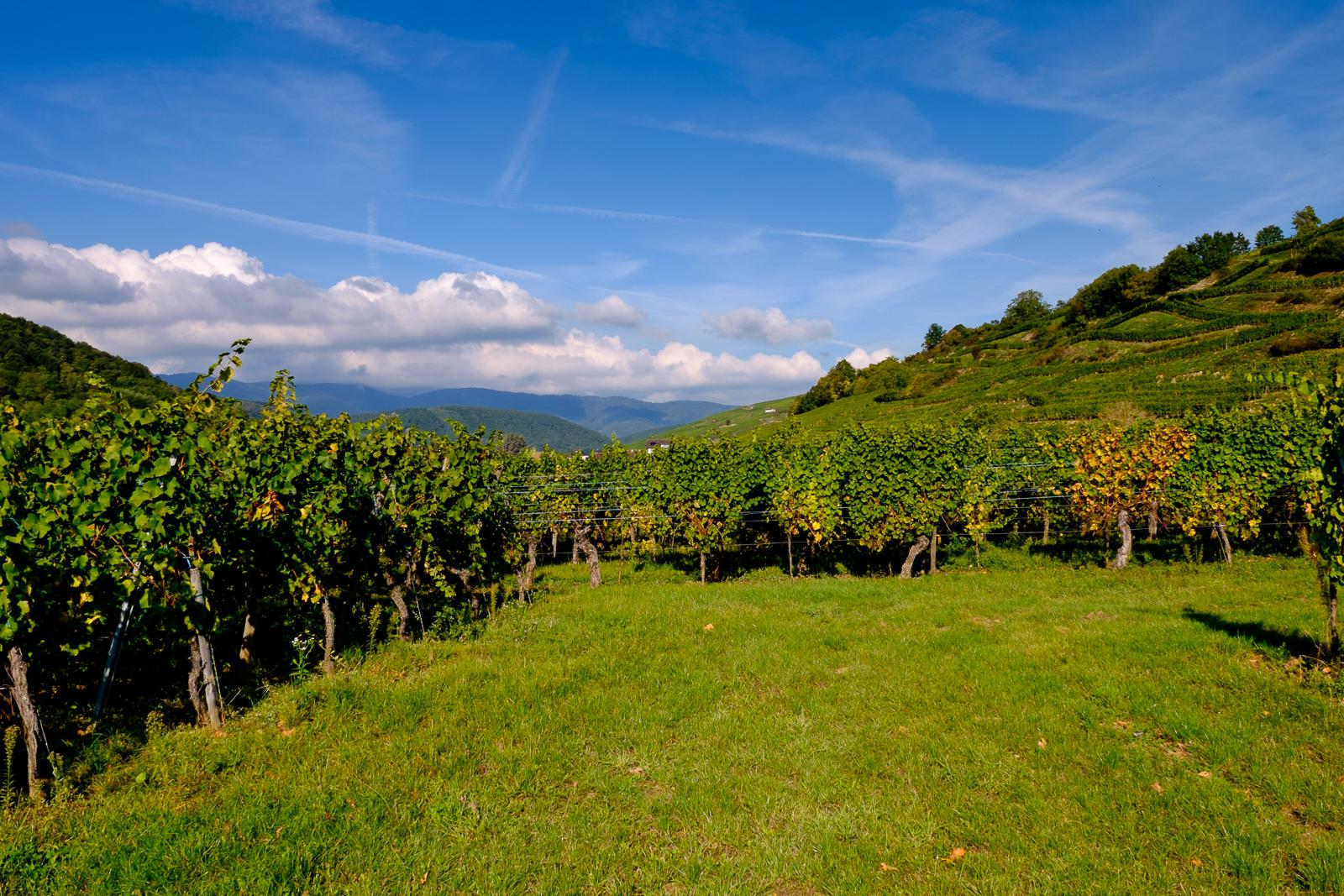 Dag02-Alsace-027-DSCF1180