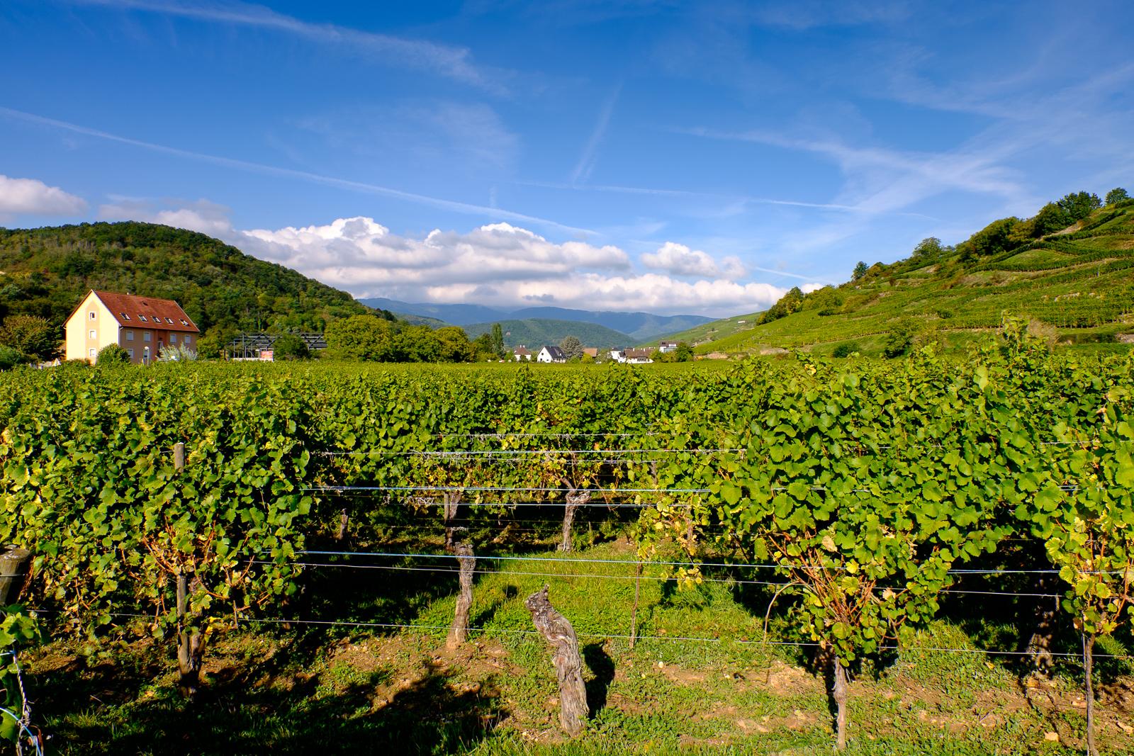 Dag02-Alsace-028-DSCF1182