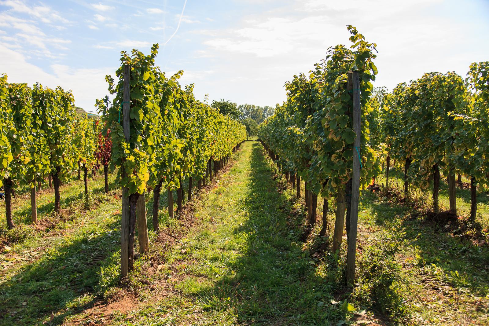 Dag02-Alsace-033-IMG_52042
