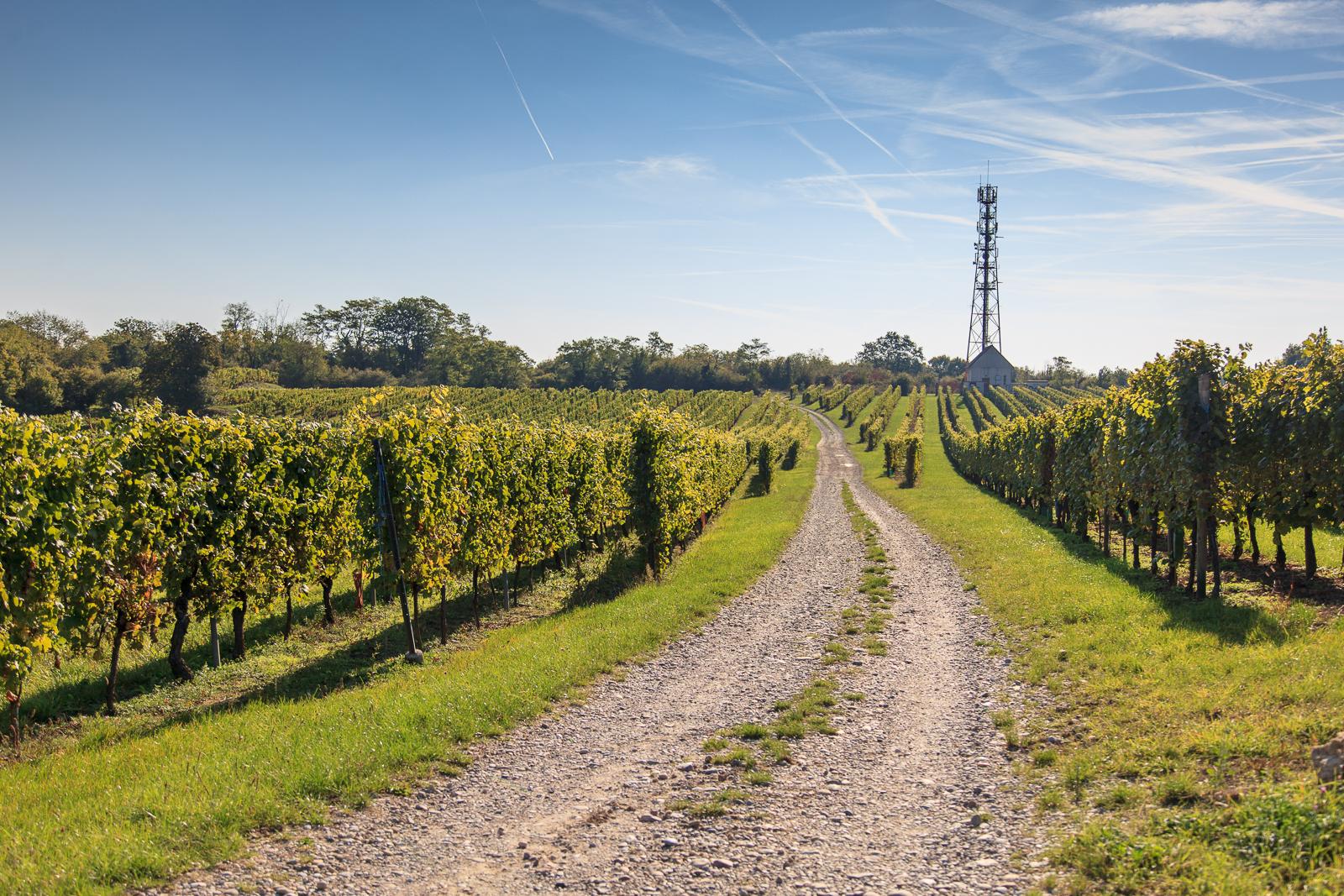 Dag03-Alsace-005-IMG_52092