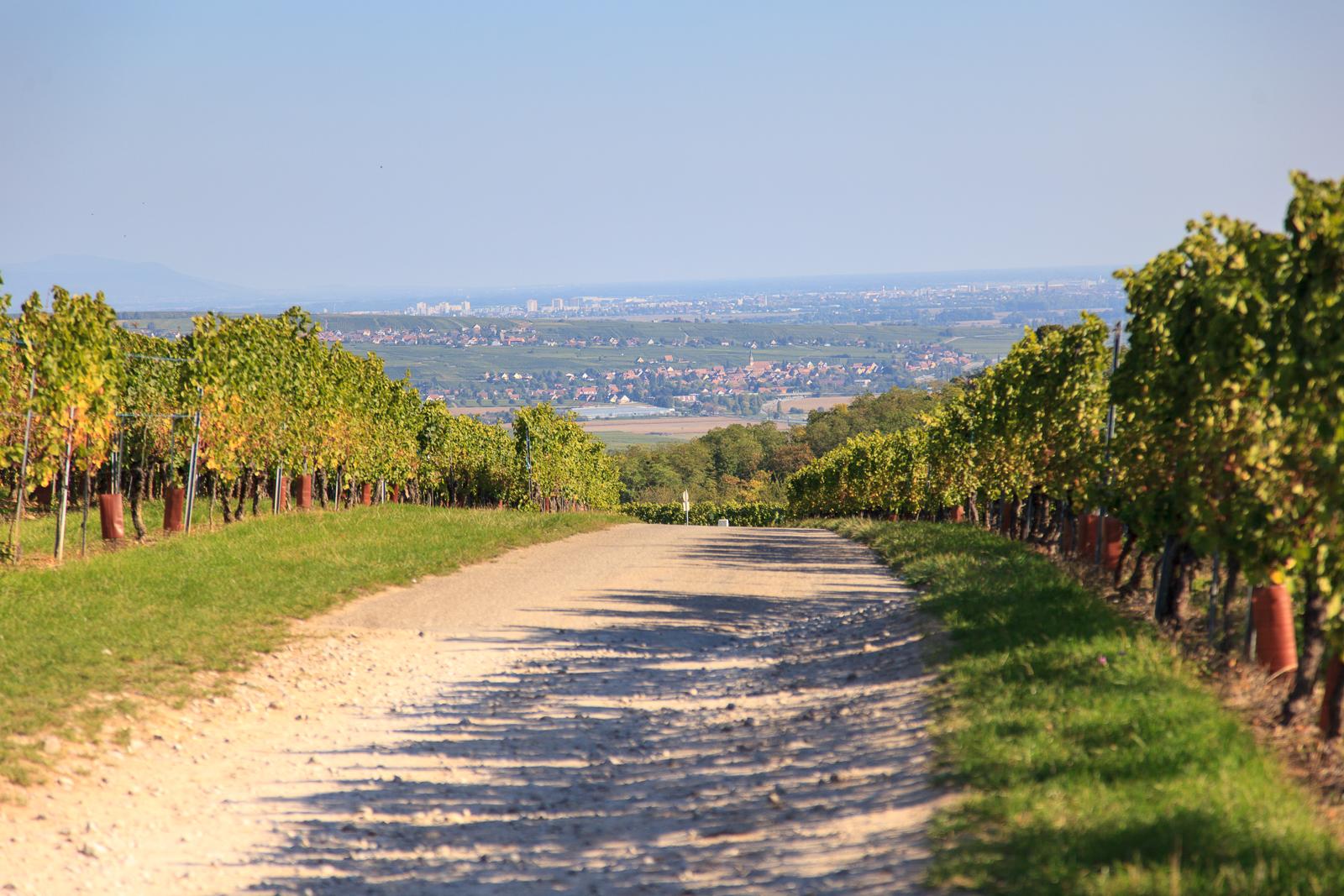 Dag03-Alsace-007-IMG_52099