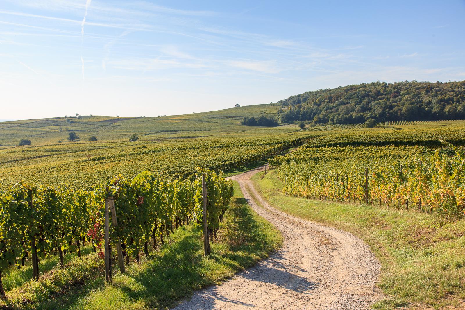 Dag03-Alsace-018-IMG_52120