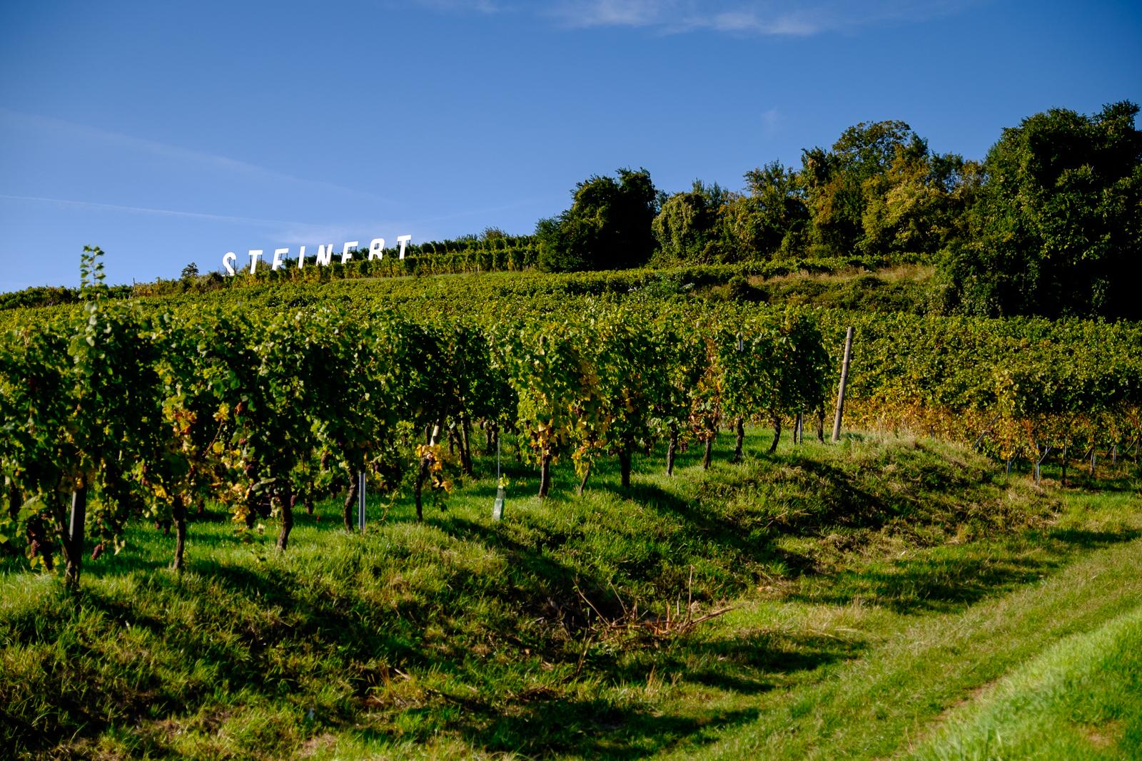 Dag03-Alsace-033-DSCF1227