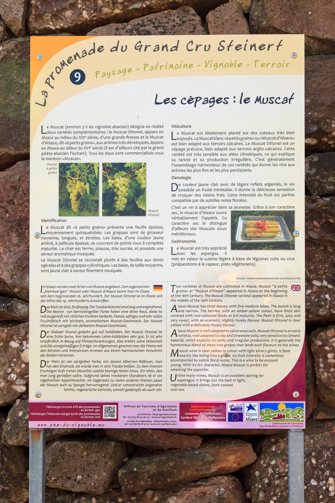 Dag03-Alsace-050-IMG_52162