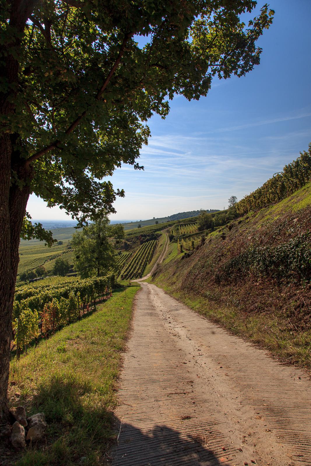 Dag03-Alsace-054-IMG_52173