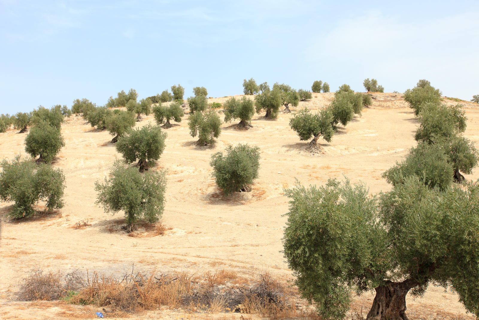 Dag02-Andalusie-065-IMG_56604
